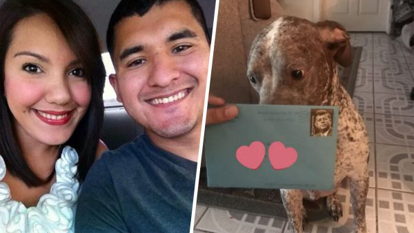 man sends birthday cards to his dog
