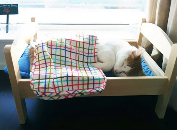 IKEA doll beds for cats